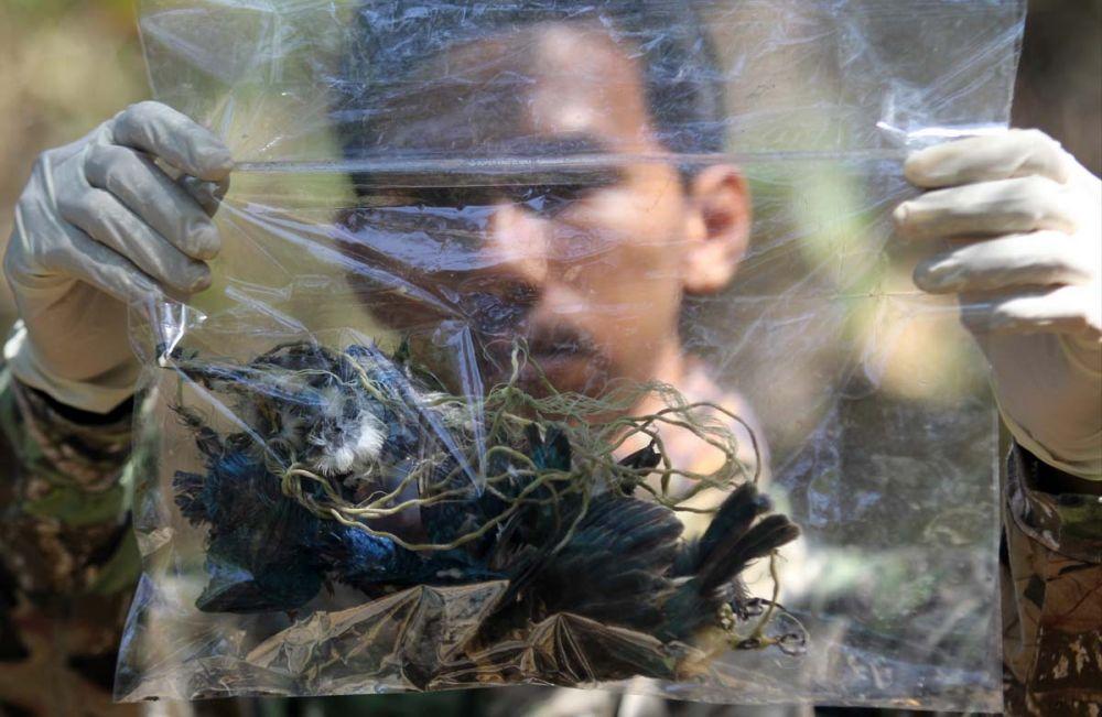 Salah satu burung dilindungi yang ditemukan mati tertembak di hutan Mangrove, Wonorejo, Surabaya