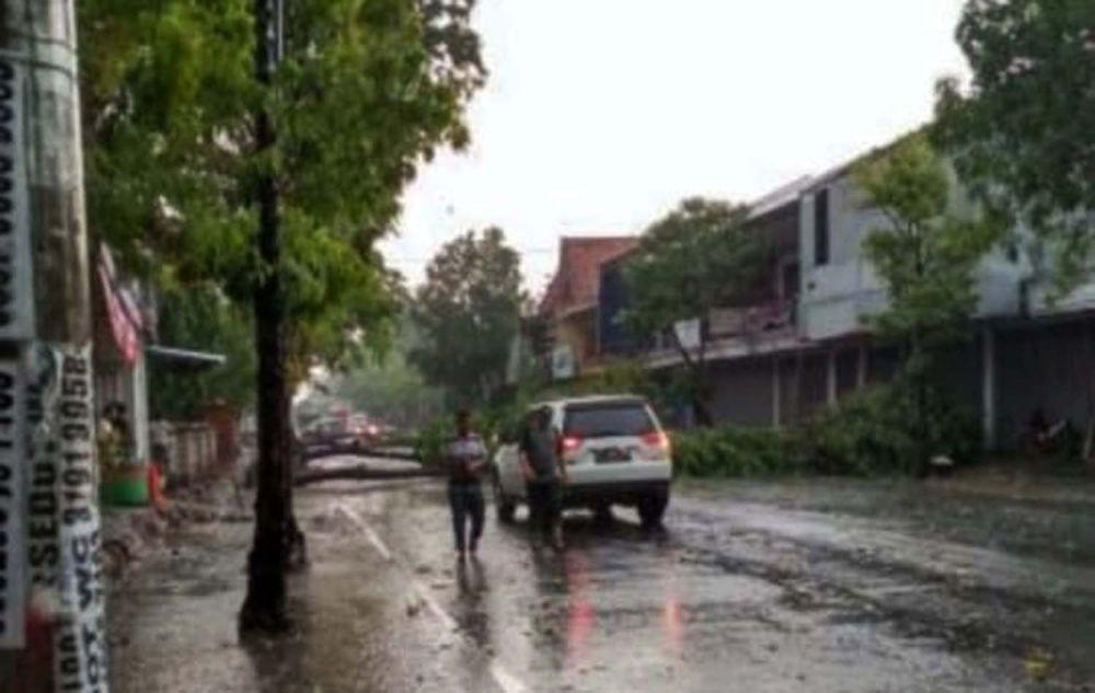 Pohon tumbang di Jambean, Bojonegoro
