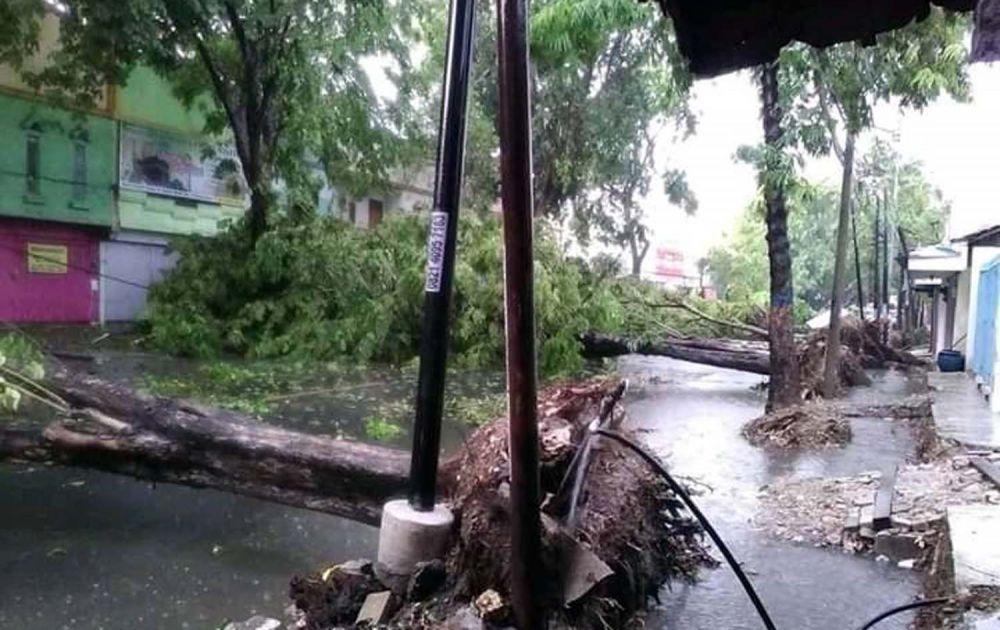 Pohoh tumbang di sejumlah titik di Bojonegoro