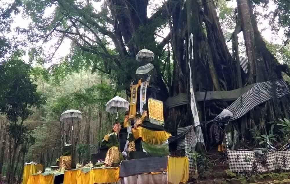 Wisata Religi Beji Antaboga Di Banyuwangi Wujud Ragam Agama