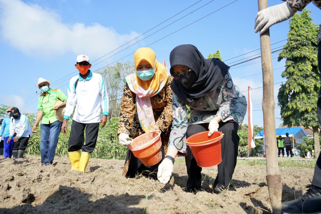 Petani tanaman pangan Banyuwangi digelontor bantuan 582 ton benih berkualitas