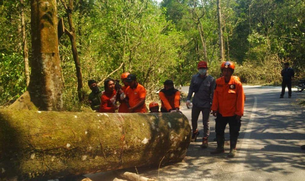 Petugas gabungan mengevakuasi pohon tumbang akibat angin kencang di Cangar, Pacet