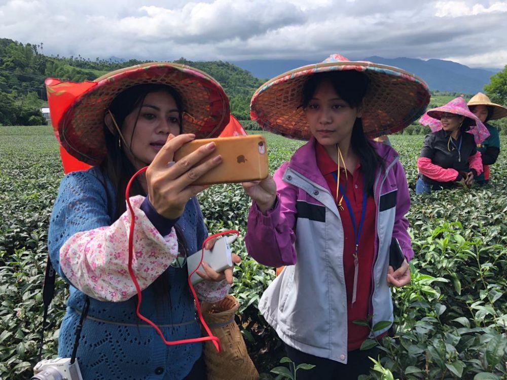 Keseruan memetik daun teh di Agro Wisata Chulu, Taiwan