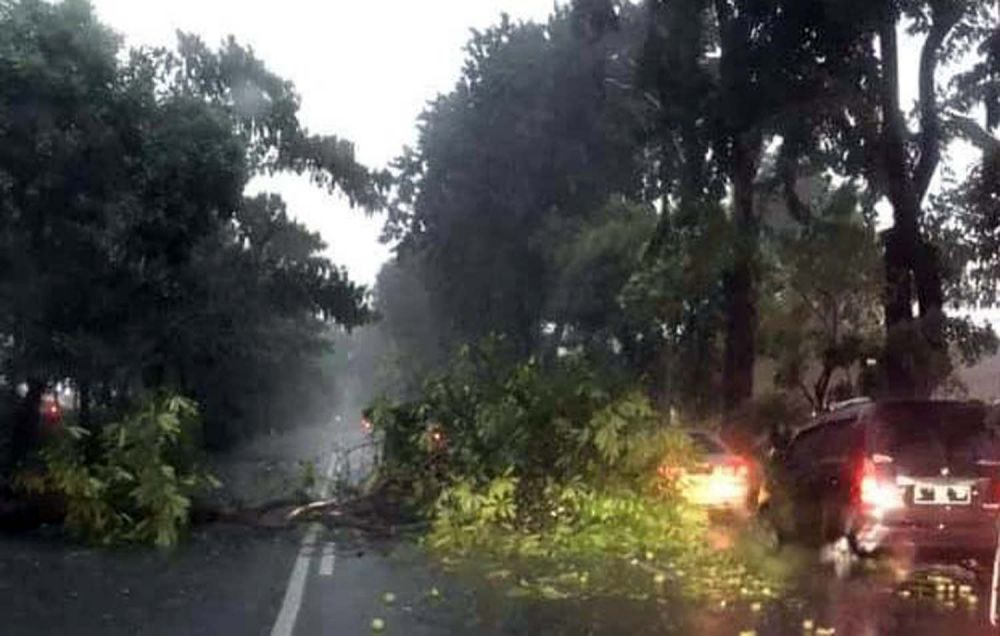 Pohon tumbang di Jalan Ahmad Yani, Surabaya