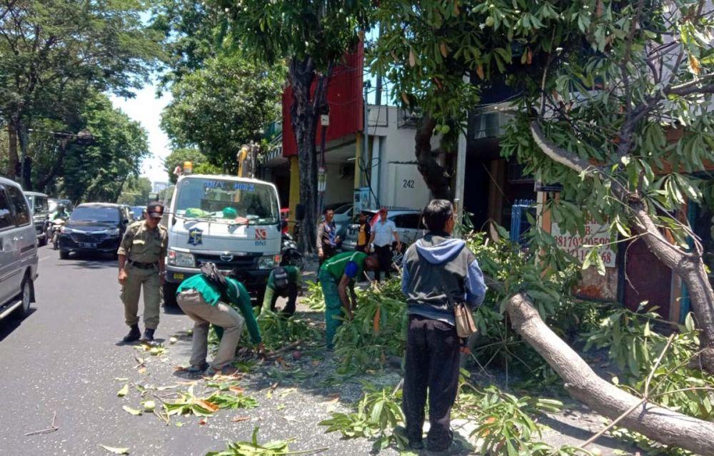 Pohon tumbang di Jalan Kertajaya, Surabaya