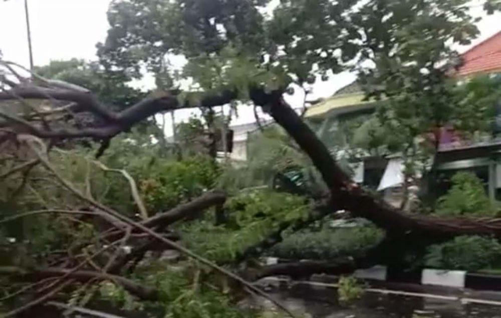 Pohon tumbang di Jalan Banyu Urip atau dekat Pasar Asem, Surabaya