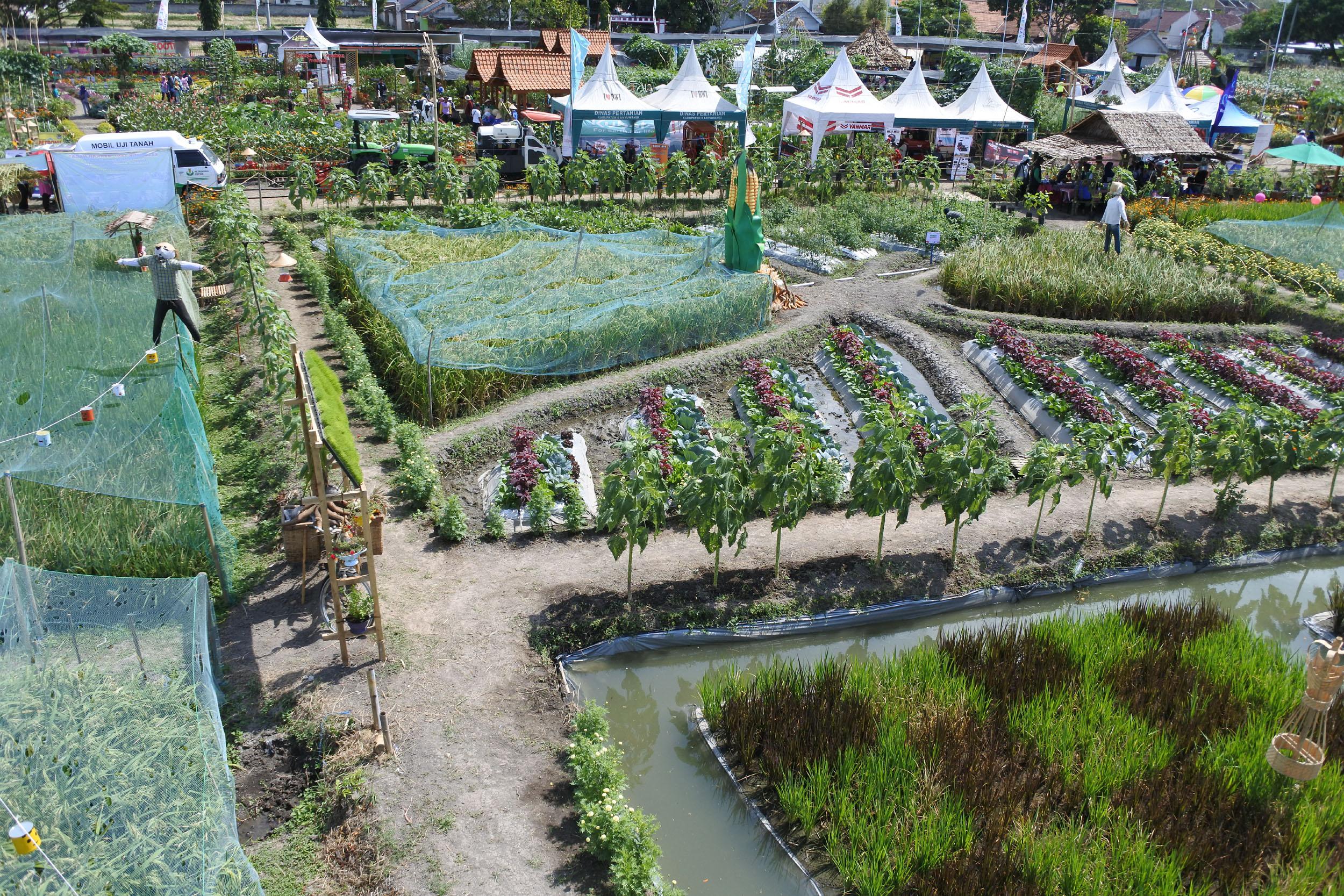 Sajikan Wisata Pertanian, Banyuwangi Agro Expo Dibanjiri Pengunjung