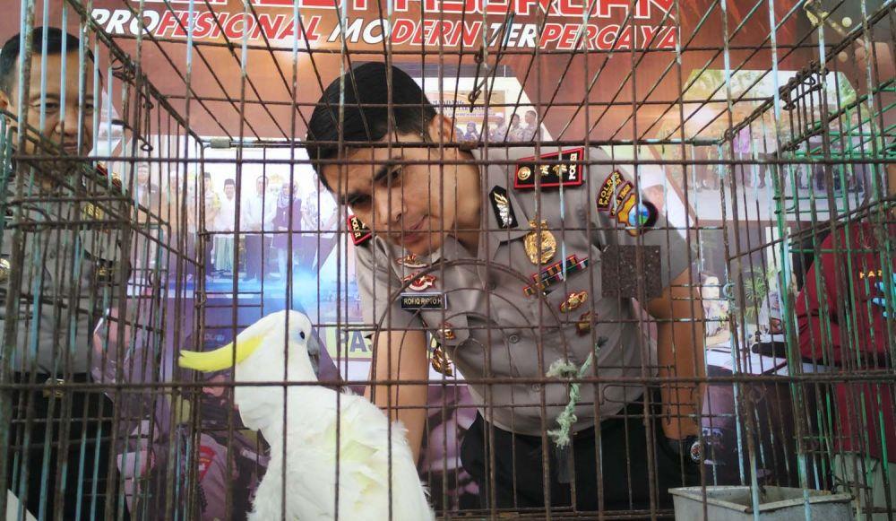 Kapolres Pasuruan AKBP Rofiq Ripto Himawan melihat kondisi satwa langka dilindungi yang disita dari rumah seorang warga