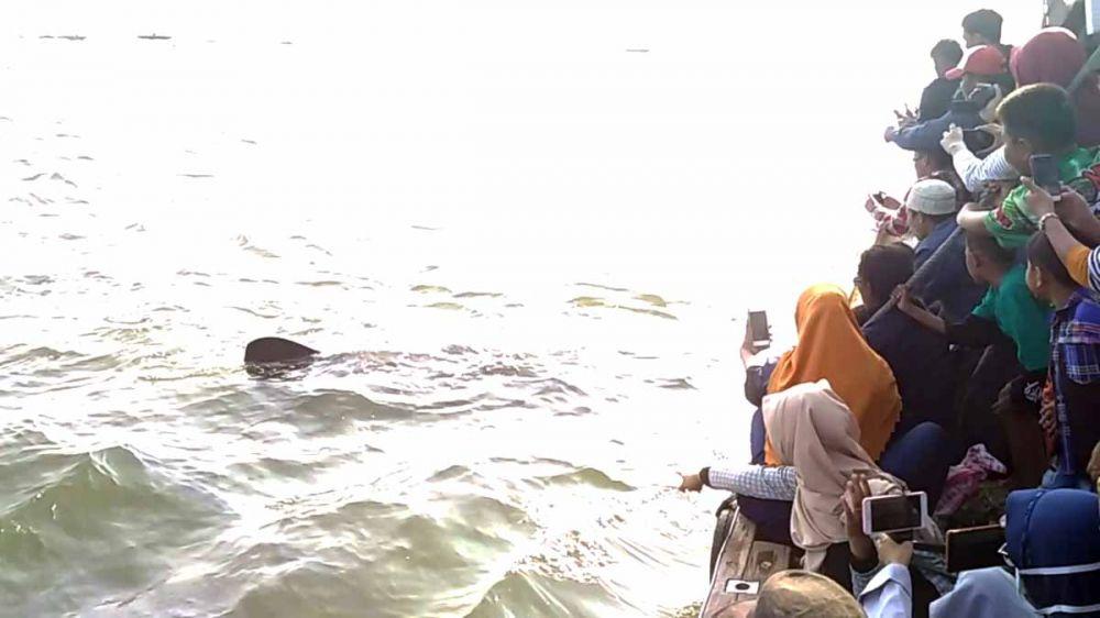 Kehebohan warga peserta Tradisi Praonan di Pasuruan saat Hiu Tutul menampakkan diri di laut lepas