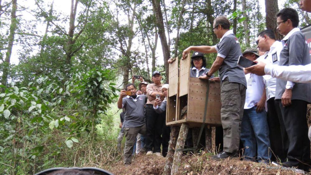 Pelepasliaran 7 satwa langka dan dilindungi oleh BBKSDA Jatim di Cagar Alam Gunung Picis dan Gunung Sigogor, Ponorogo