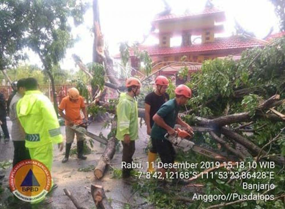 Pohon tumbang di depan klenteng di Jalan Jaksa Agung Suprapto, Bojonegoro
